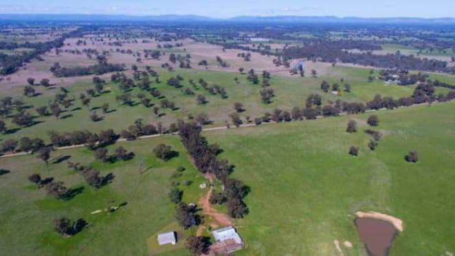 Wagyu beef producer David Blackmore buys Benalla district farm