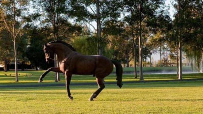 Horse breeder John Messara expands Arrowfield Stud