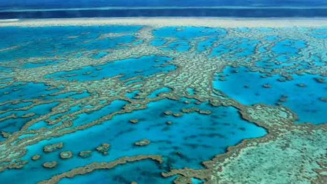 Cleaning up runoff onto the Great Barrier Reef: how art and science are inspiring farmers to help