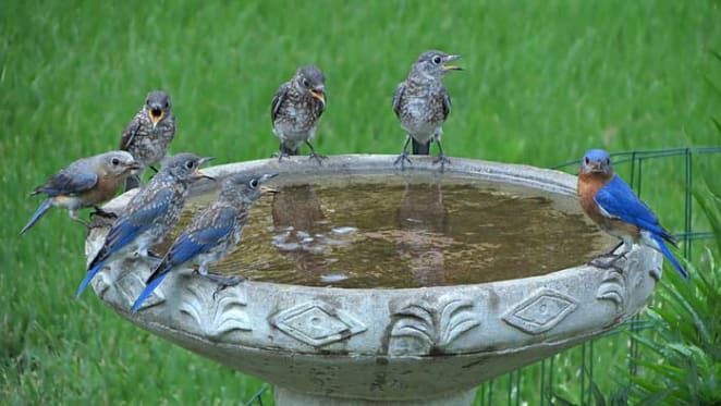 Birdbath, food or water? How to attract your favourite birds to your garden
