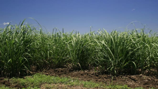Central Queensland cane farms selling fast due to high sugar prices: HTW