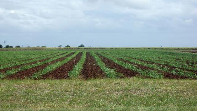 Five future challenges for Australian agriculture