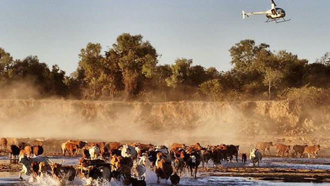 Wollogorang and Wentworth cattle stations sell for $47 million