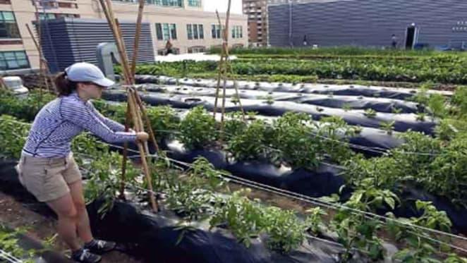 Urban food systems may be just a 'side dish' at Habitat III