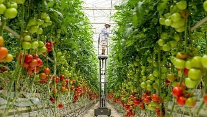Frank Costa set to float his horticulture company