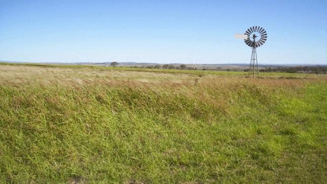 Darling Downs rural activity picks up: HTW