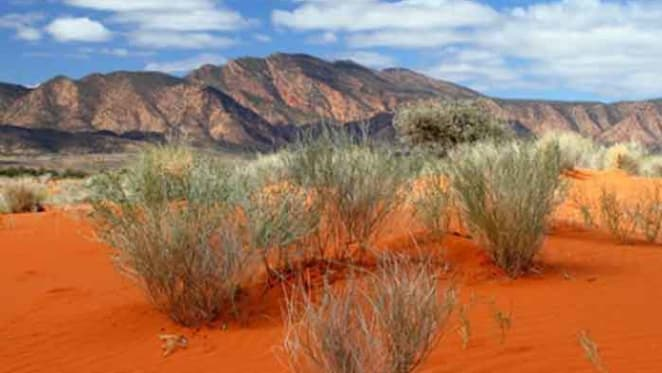 Look to the Australian deserts to future-proof our crops from drought