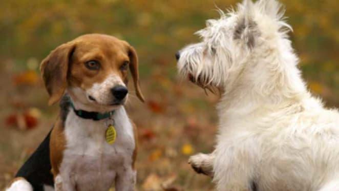 Why pets strengthen neighbourhood ties