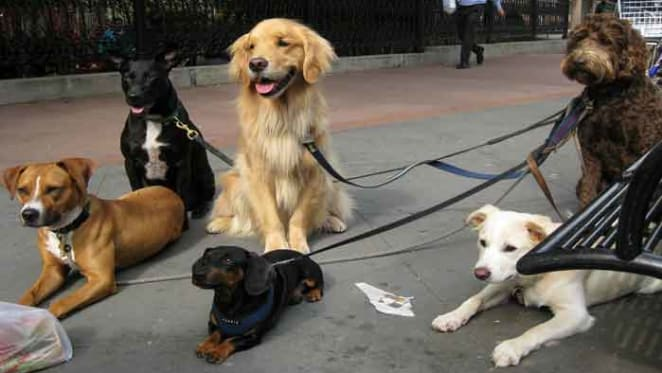 We need a better understanding of how we manage dogs to help them become better urban citizens