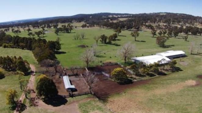 Doughboy Mountain listed by Salter black angus breeders