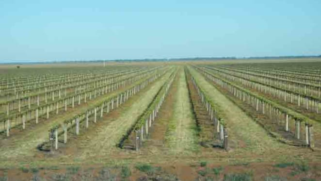 Large scale Riverina vineyard hits the market