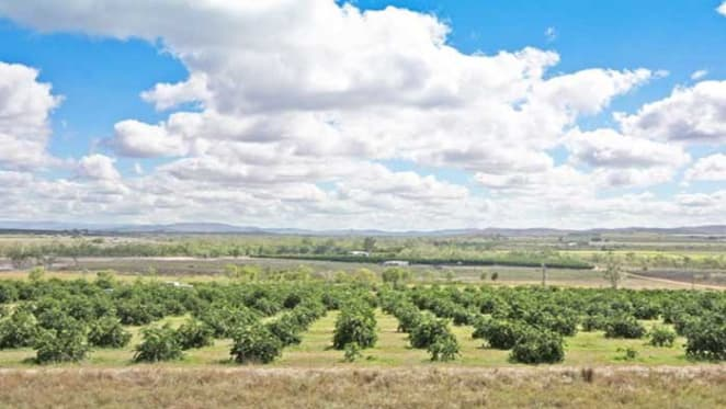 Market ripe for citrus and grape producers in Far North Queensland