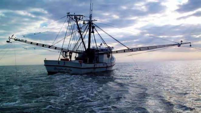 Australian fished populations drop by a third over 10 years, study finds