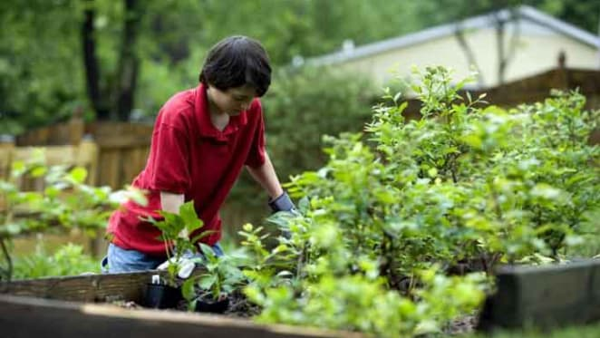 Gardening improves the health of social housing residents and provides a sense of purpose