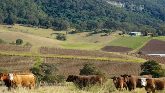 Hunter Valley NSW reaps clearance rate of 59.1 percent: CoreLogic