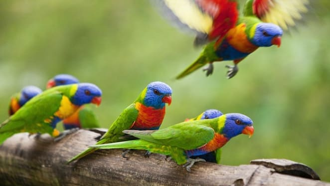 Blocks and flocks: why are some bird species so successful in cities?