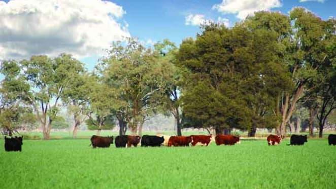 Tom Roberts' The Golden Fleece shearing farm, Newstead sold