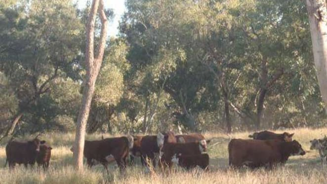 Hewitt Cattle buys two NT pastoral assets for $50 million