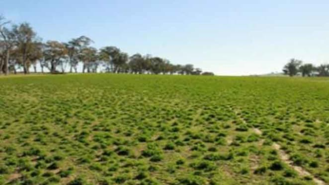 Strong sales continue in NSW Central Tablelands: HTW