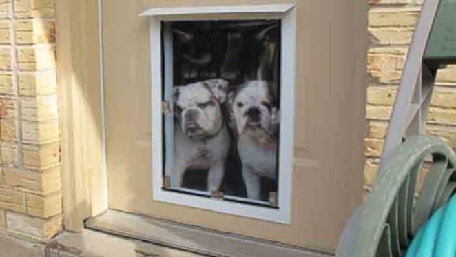 Property 101: Pet bonds in WA