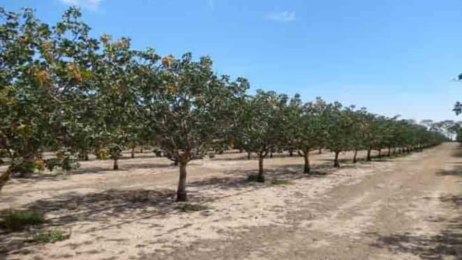 Wimmera Pistachio farm listed
