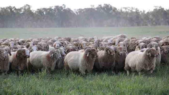 Hassad Australia make another farming loss