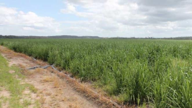 Sugarcane farm at Bundaberg to become macadamia farm after $2 million Bucca sale