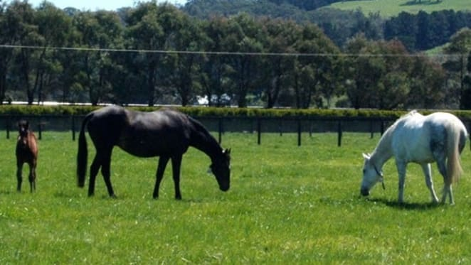 Think Big Stud listed in NSW Southern Highlands