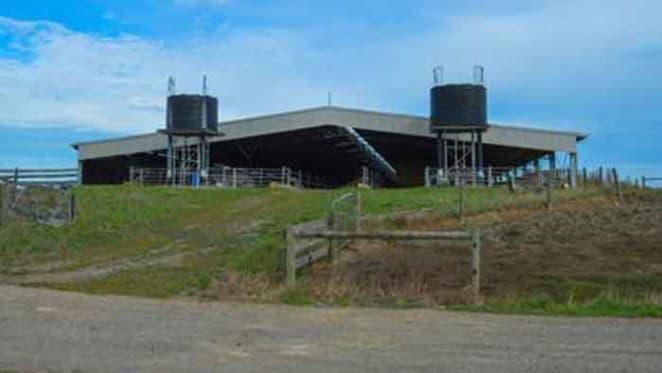 Victorian dairy farmers weathering rural market