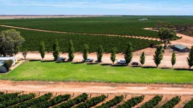 Kingston Estate Wines expands vineyard holdings