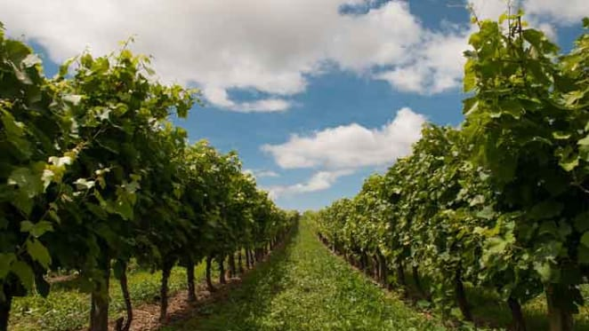 Casella buys McLaren Vale vineyard