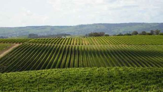 Conte family sell McLaren Vale vineyards