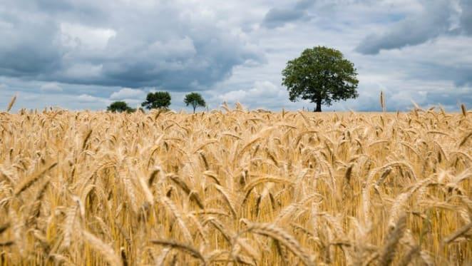 Mildura rural market sales activity down: HTW Rural