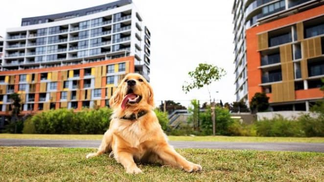 Pet friendly developments triggers dogs at Discovery Point
