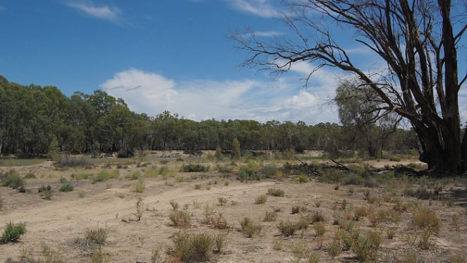 Minister Melinda Pavey gathers water resource plans for NSW