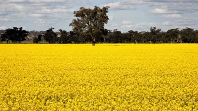 Australian agribusinesses remain resilient: Colliers International