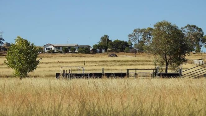 Tamworth values expected to soften in 2020: HTW rural