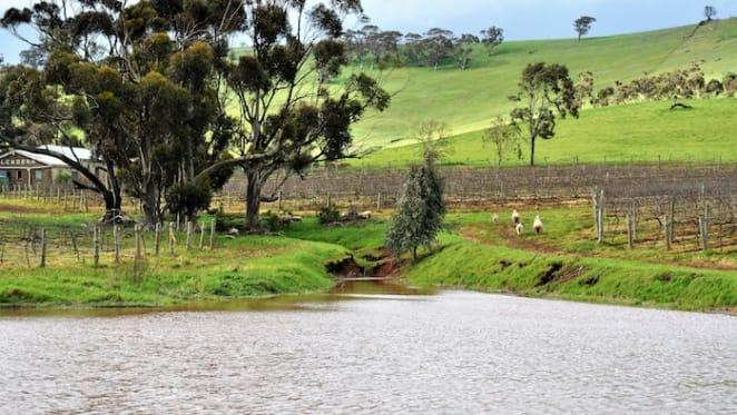 Glendora listing unlocks small vineyard opportunity in SA's Lower North region