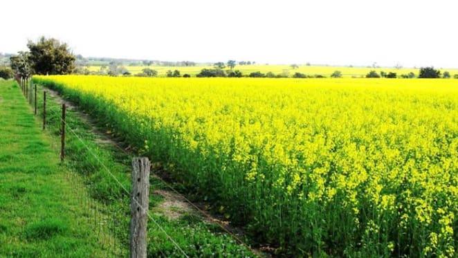 Hyfield cropping property Kojonup sells for $25 million plus