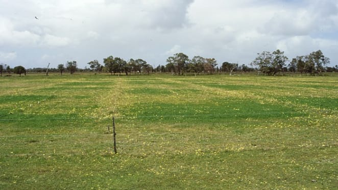 Western Queensland rural properties with grass reserves sell strongly: HTW Rural