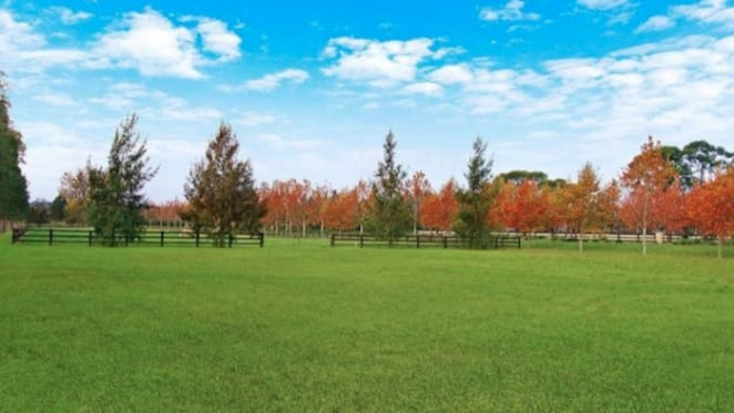 Polo offering in Richmond Lowlands sold by Peter Higgins