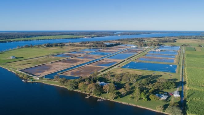 Australia's first prawn farm for sale in Northern NSW