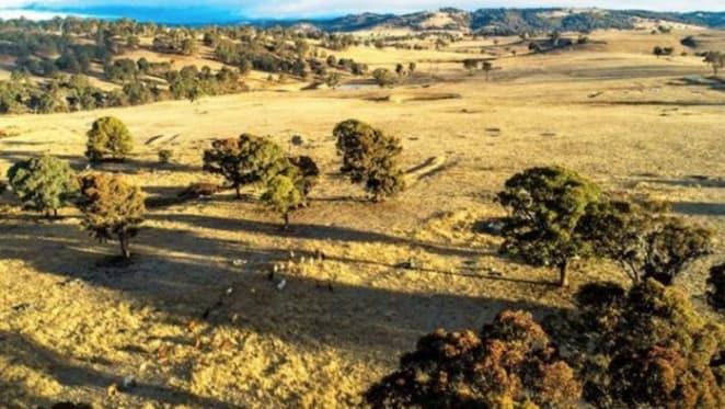 Gina Rinehart's Wagyu herd expansion with New England buy
