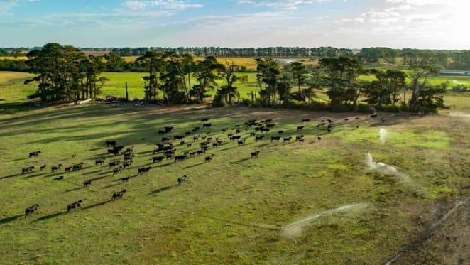 Gippsland's 568 hectare farm Paringa sold