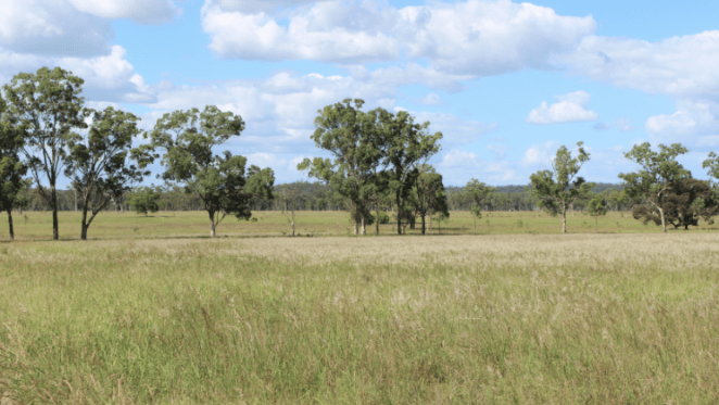 Family held cattle grazing land in Queensland up for auction