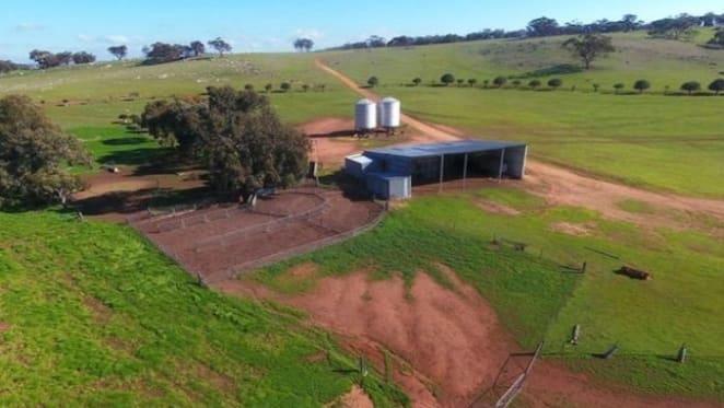 Western Australia's rural market see's hope in rain recovery: HTW Rural