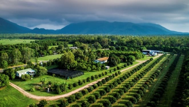 World's largest Achacha plantation listed in Queensland