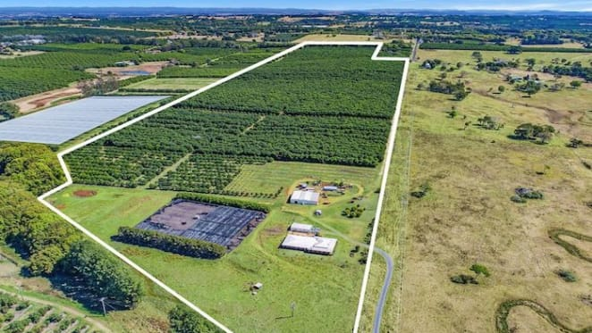100-acre Alstonville Macadamia farm with homestead sold