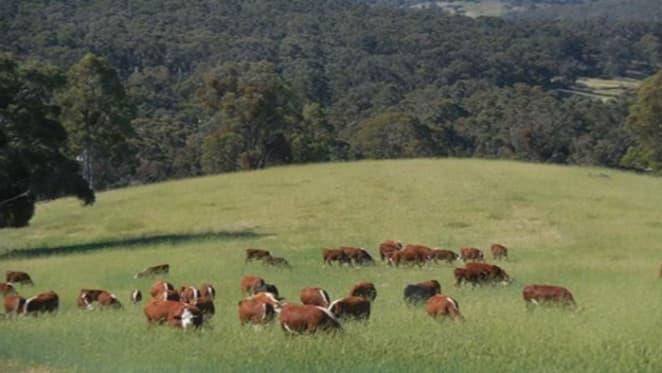 Binda farm Maidstone Downs listed