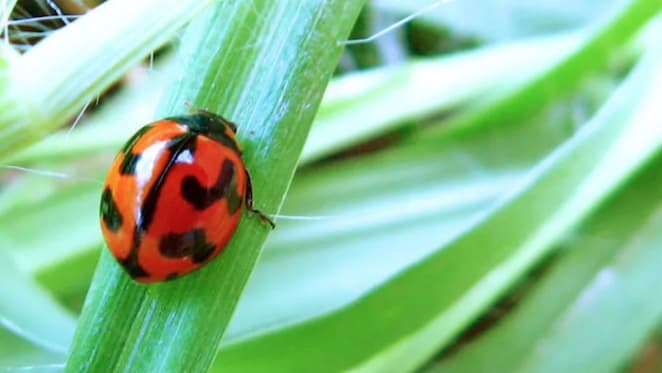 Five reasons not to spray the bugs in your garden this summer